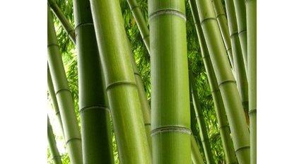 Mediterrane planten fleurdirect for Bamboe plant