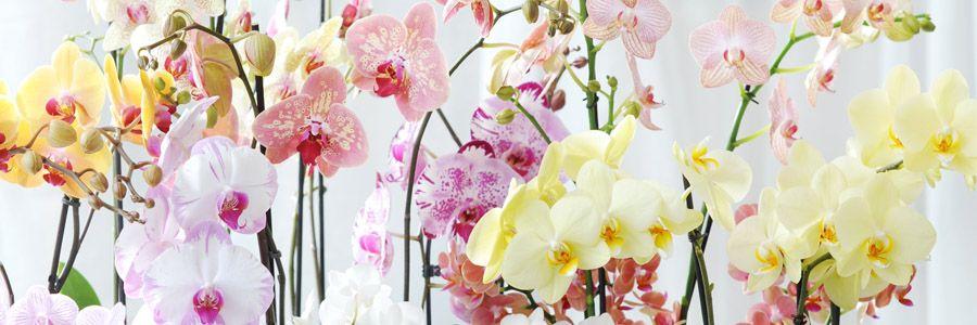 Fleurdirect Blog - De woonplant van november is de bijzondere ...