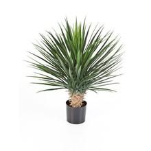 Yucca rostrata kunstplant