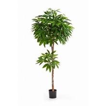 Pachira  kunstplant