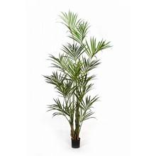 Kentiapalm  kunstplant
