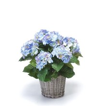 Hortensia blauw in mand kunstplant
