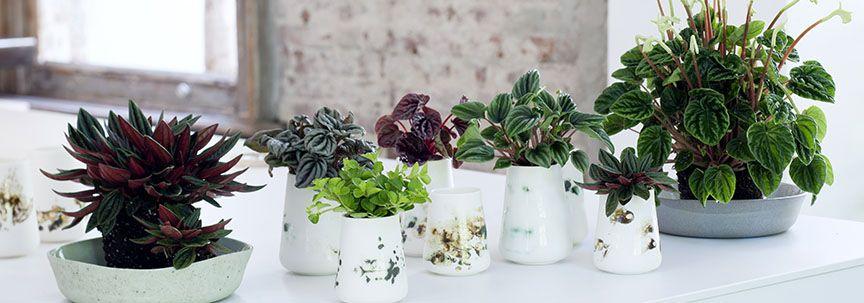Welke plant past het beste bij uw interieur?