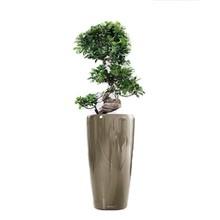 Potten Voor Planten.Planten In Pot Kopen Kantoorplanten En Meer Fleurdirect