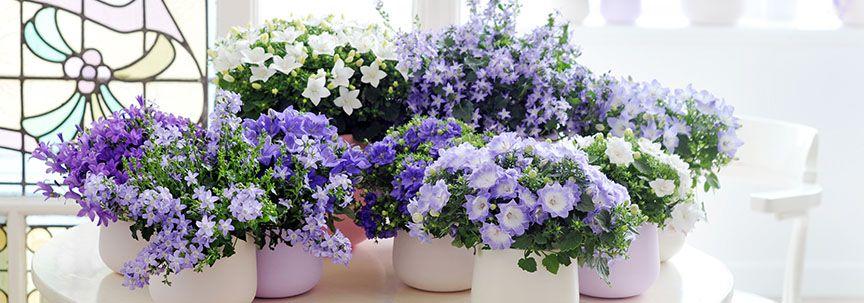 Woonplant van de maand mei: Binnenstebuiten planten