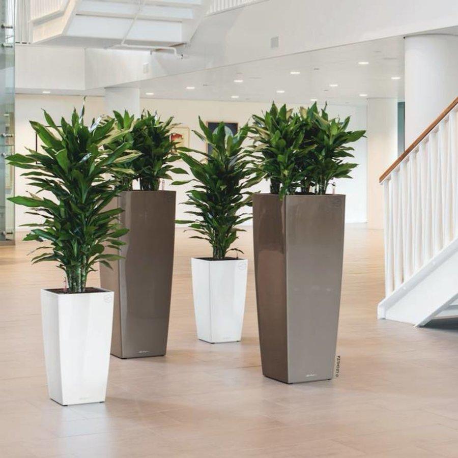 Kamerplanten online kopen groot assortiment fleurdirect for Grote planten voor binnen
