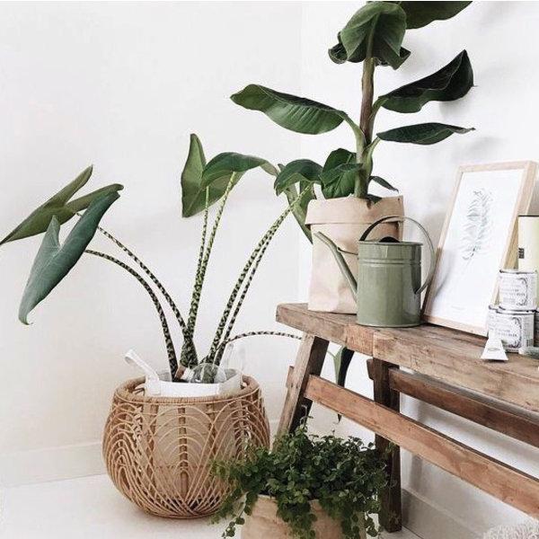 mooie planten voor woonkamer] - 100 images - liefde voor mijn ...