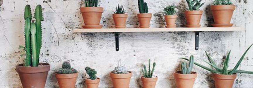 Plant plus terracotta: kleur in huis!