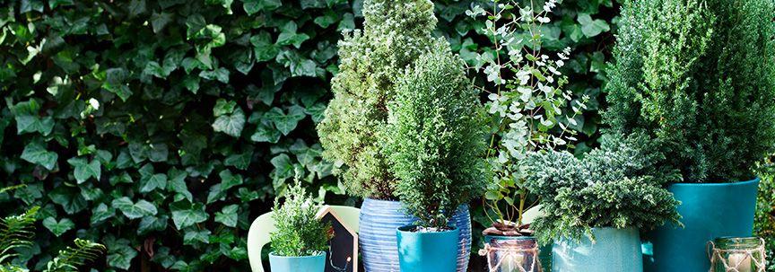Buitenplanten voor in de tuin