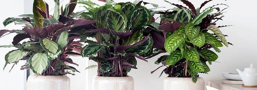 Kamerplanten voor het najaar