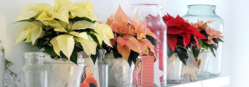 Verzorging van uw kamerplanten in de winter