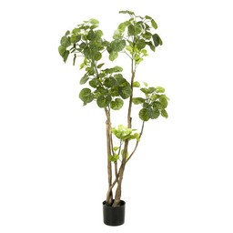 Polyscias large kunstplant