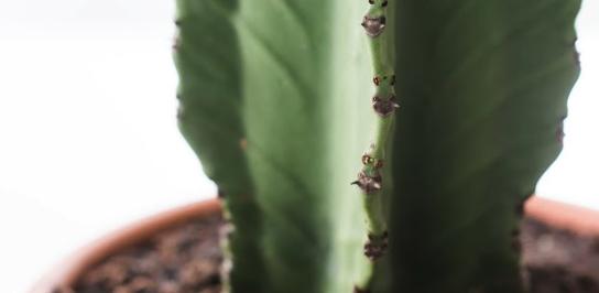 Potgrond Voor Cactussen.De Cactus Bruikbare Informatie Fleurdirect