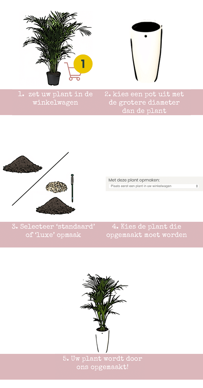 fleurdirect plant en pot opmaakservice