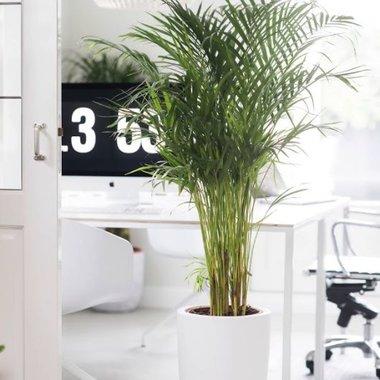 Kamerplanten kopen | Compleet assortiment - Fleurdirect