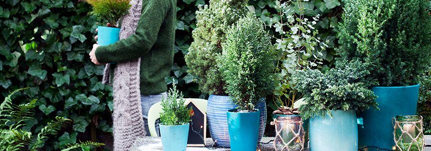 Uw planten buiten in de gaten houden