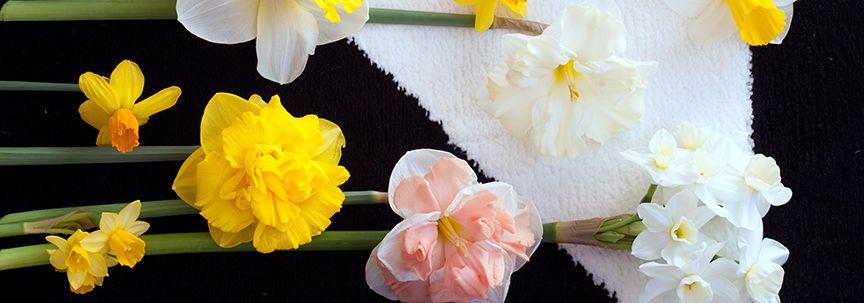 Woonplanten van maart; Voorjaarsbrengers