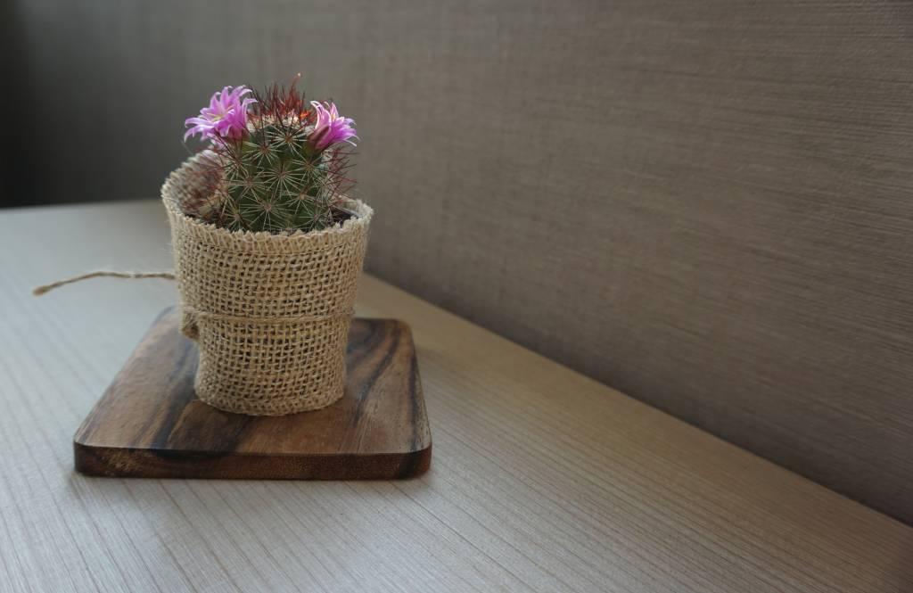 Planten in papieren zakken