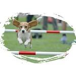 Hondensport trofeeën