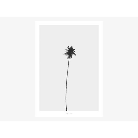 "Poster ""All About Palms No. 4"" von typealive"