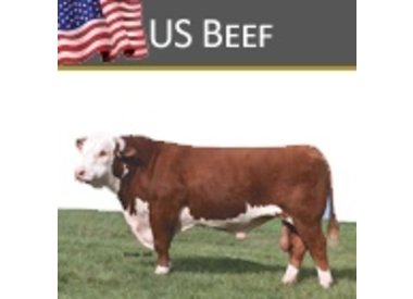 US Beef