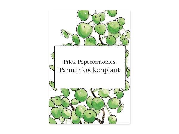 Kaart Pilea