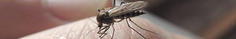 Wat te doen tegen muggen in de slaapkamer? 5 tips die werken