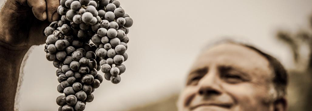 Passie voor kwaliteit met Italiaanse wijn
