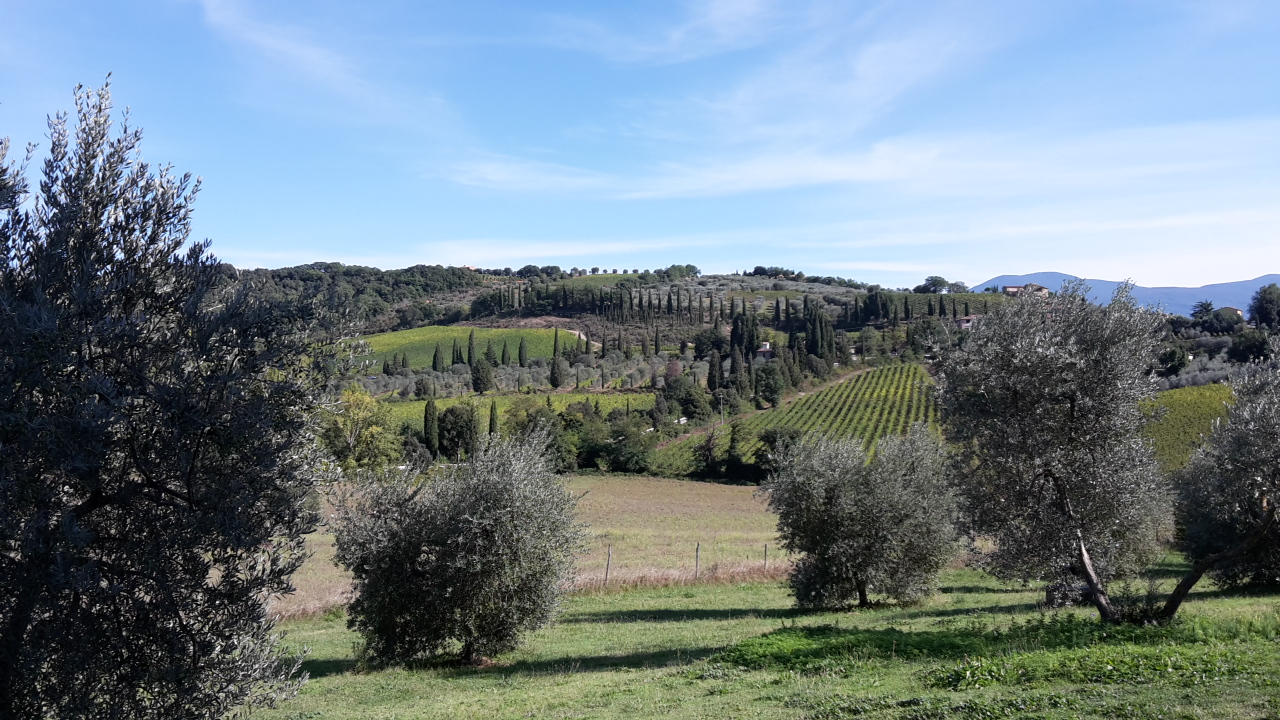Montalcino natuur