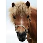 TSS-Nijkerk Paardenkop