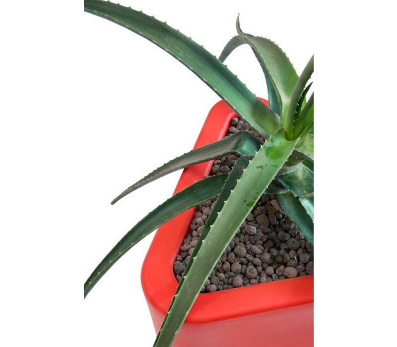Eve bac à plantes