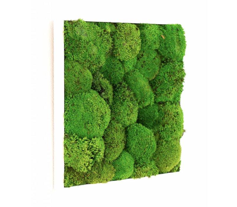 Kokoon plant schilderij van mosbol