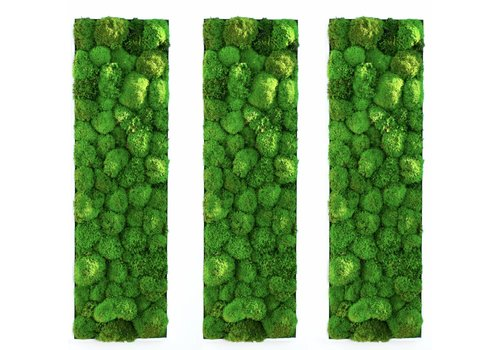 Green Mood Kokoon plant schilderijen van mosbol