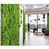 Green Mood Plantenwand uit mosbol