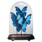 Opgezette vlinders in stolp
