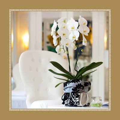 "Phalaenopsis Grandiflora ""Tsarine®"" 2 tak in wit keramiek"