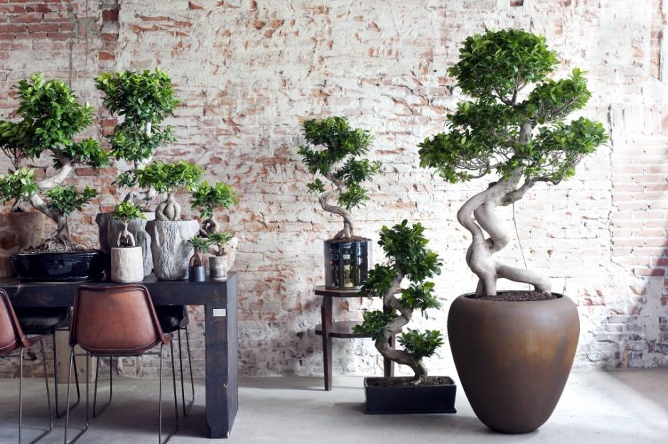 Plantes exclusifs