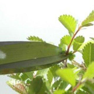 Bonsai-Zubehör