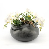 Phalaenopsis Artisto weiß 5 Niederlassung in Anthrazit
