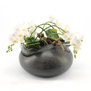 Phalaenopsis Artisto white 5 branch in anthracite