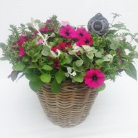 Perkgoed Hanging Basket in rattan basket XL