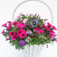 Perkgoed Hanging Baskets in white handle basket