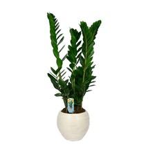 Plantes pot florastore for Solde plante interieur