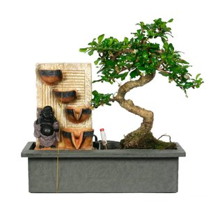 Bonsai EasyCare with Buddha and waterfall