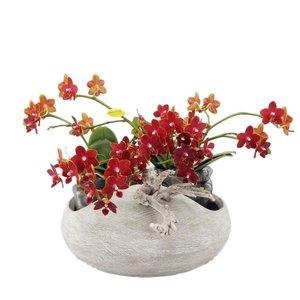 Phalaenopsis Artisto néo béton regard avec huit branches de fleurs