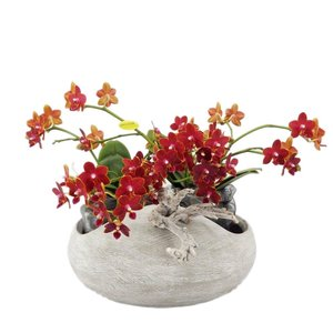 Phalaenopsis Artisto neo concrete look with 8 flower branches