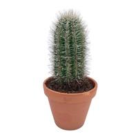 Cactus Prinly