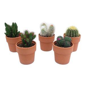 Cactus Cactus mélangé en terre cuite