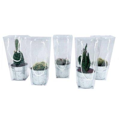 Cactus mixte de zinc dans une mallette