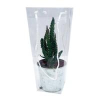 Cactus mixed zinc in carrying bag